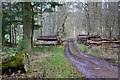NT4327 : Woodland track, Bowhill Estate by Jim Barton