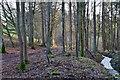 NT4327 : Woodland and burn near Carterhaugh by Jim Barton