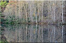 NT4227 : Trees and reflections, Bowhill Estate by Jim Barton