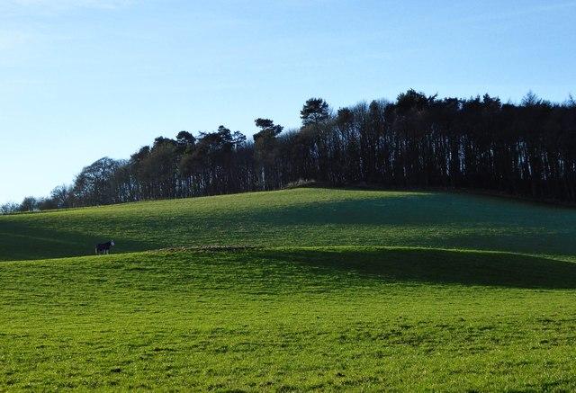 Knockhill Wood