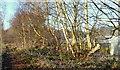 SK5952 : Longdale Lane Vicinity, NG15 by David Hallam-Jones