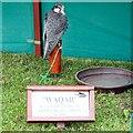 SJ9593 : Waqar at Gee Cross Fete, 2003 by Gerald England