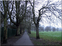 TQ4475 : Avenue of trees in Eltham Park South by Stephen Craven