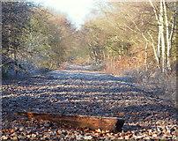 SK6052 : Salterford Farm, Whinbush Lane Vicinity, Calverton, Notts. by David Hallam-Jones