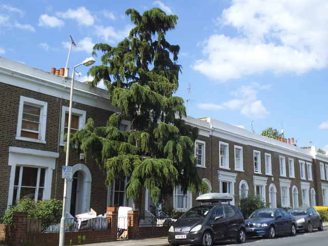 Big tree on Guildford Grove