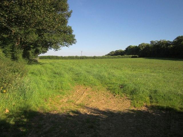 Field near Wheal Josiah
