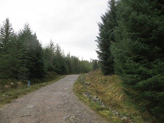 Forest road, Abriachan