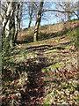 SE0720 : Elland FP51 in Gate Head Wood by Humphrey Bolton