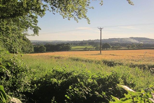 Barley near Morwell Barton
