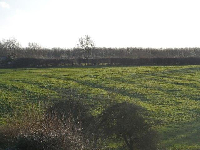 Ridge and furrow patterns near Tingewick