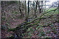 SD6940 : Brook on the edge of Over Hacking Wood by Bill Boaden