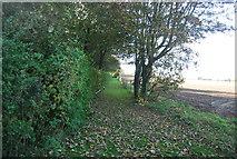TG0509 : South of Colegate Lane by N Chadwick