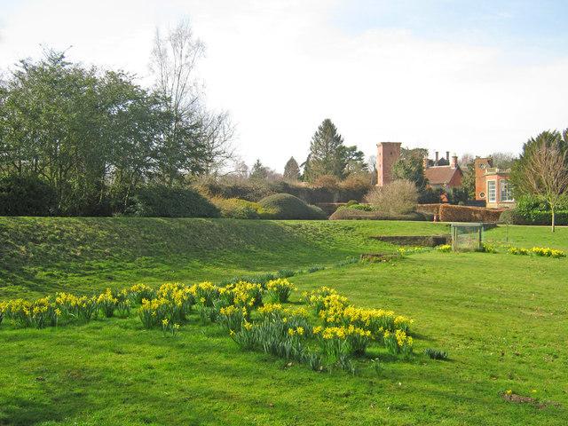 Daffodils at Rufford Park
