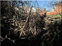 SX9066 : Blocked path, Nightingale Park by Derek Harper