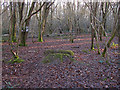 SU9458 : Woodland, Bisley Common by Alan Hunt