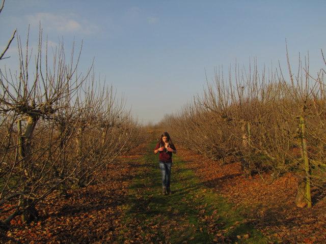 Walker in Orchard
