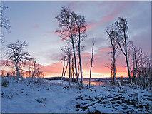 NH6454 : Dawn in Tullich Wood by Julian Paren