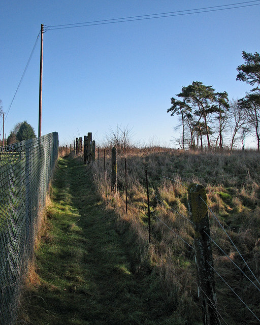 Six Mile Bottom: poles, posts and pines by the railway