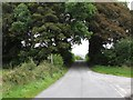 H9818 : Tree arch east of the junction of Cranny Road and Lough Road, Mullaghbawn  by Eric Jones