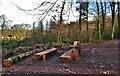 SN0413 : Rustic Woodland Picnic Area by Deborah Tilley