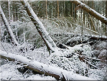 NH6454 : Storm damage in Tullich Wood by Julian Paren
