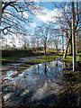TQ2897 : Puddle near Animal Hospital Hospital, Trent Park, Cockfosters by Christine Matthews