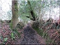 SS5894 : Llwybr Dyfnant / Dunvant Path by Alan Richards