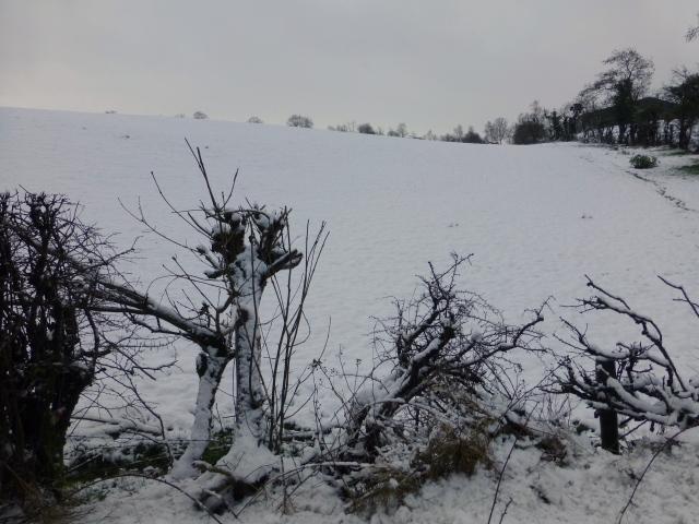 Snow, Cranny