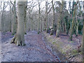 TQ8287 : Ditch in Belfairs Park Wood by Roger Jones