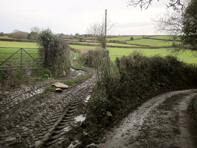 Field access track, Nethershaugh Farm