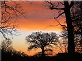 TL8063 : Sunrise at Little Saxham by Bob Jones
