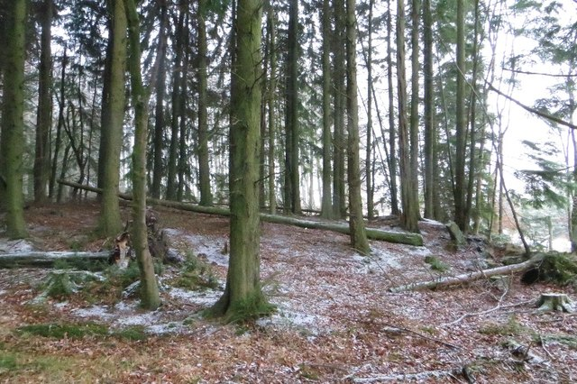 Woodland near Upper Yetts