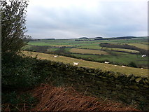 NZ0658 : Looking South across Apperley Bank by Clive Nicholson