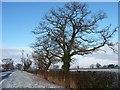 SJ4363 : Trees on the east side of Sandy Lane by Christine Johnstone