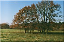 TL1947 : Trees on Biggleswade Common by John Winder