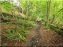 SE0726 : Bridleway to Doctor Hill by Derek Harper