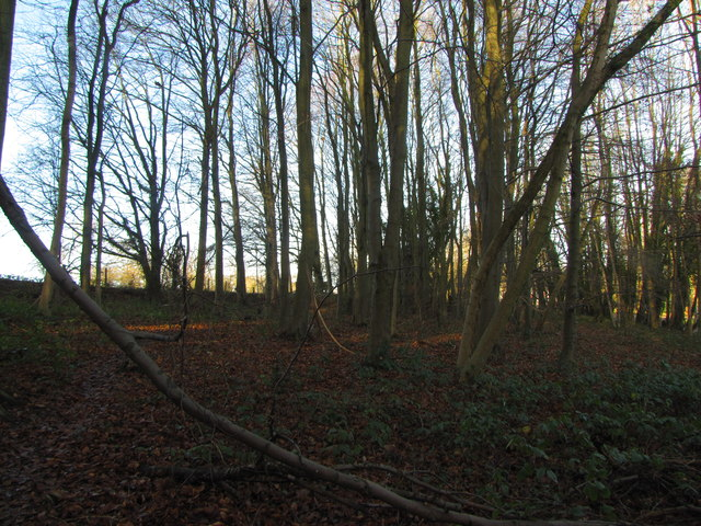 Old Grove