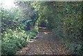 TG0709 : Woodland track by N Chadwick