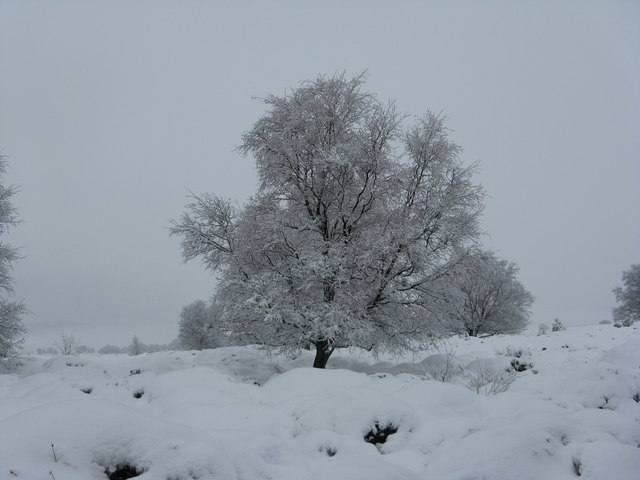 Whitwell Moor in the snow