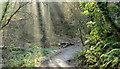 J3370 : Shaded path, Lagan Meadows, Belfast (January 2015) by Albert Bridge