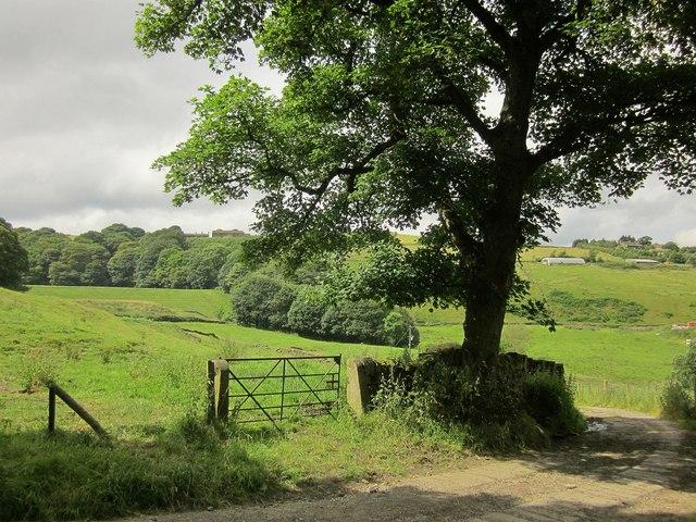 Sycamore, Ramsden Wood Farm
