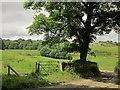 SE0626 : Sycamore, Ramsden Wood Farm by Derek Harper