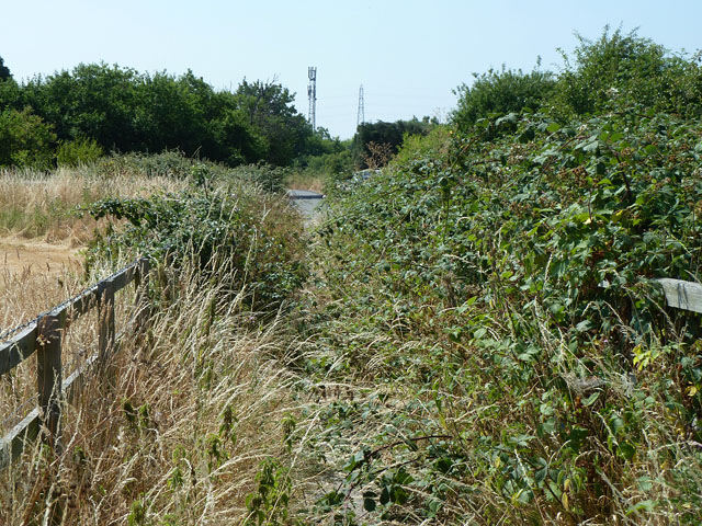 Overgrown footway from Denham Roundabout to Willetts Lane