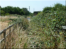 TQ0485 : Overgrown footway from Denham Roundabout to Willetts Lane by Robin Webster