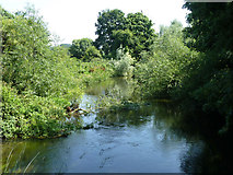 TQ0586 : River Colne by Robin Webster