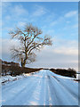 NY3930 : Snow covered road with lone tree by Trevor Littlewood