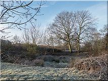 TQ2996 : Frosty Morning in Trent Park, London N14 by Christine Matthews