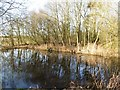 SE6773 : Pond at Hollin Hill Bogs by Gordon Hatton