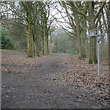 SE2436 : Footpath junction in the woods at Bramley Fall Park by Rich Tea