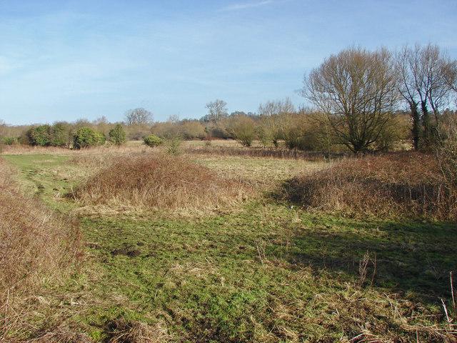 Rough pasture near Denham